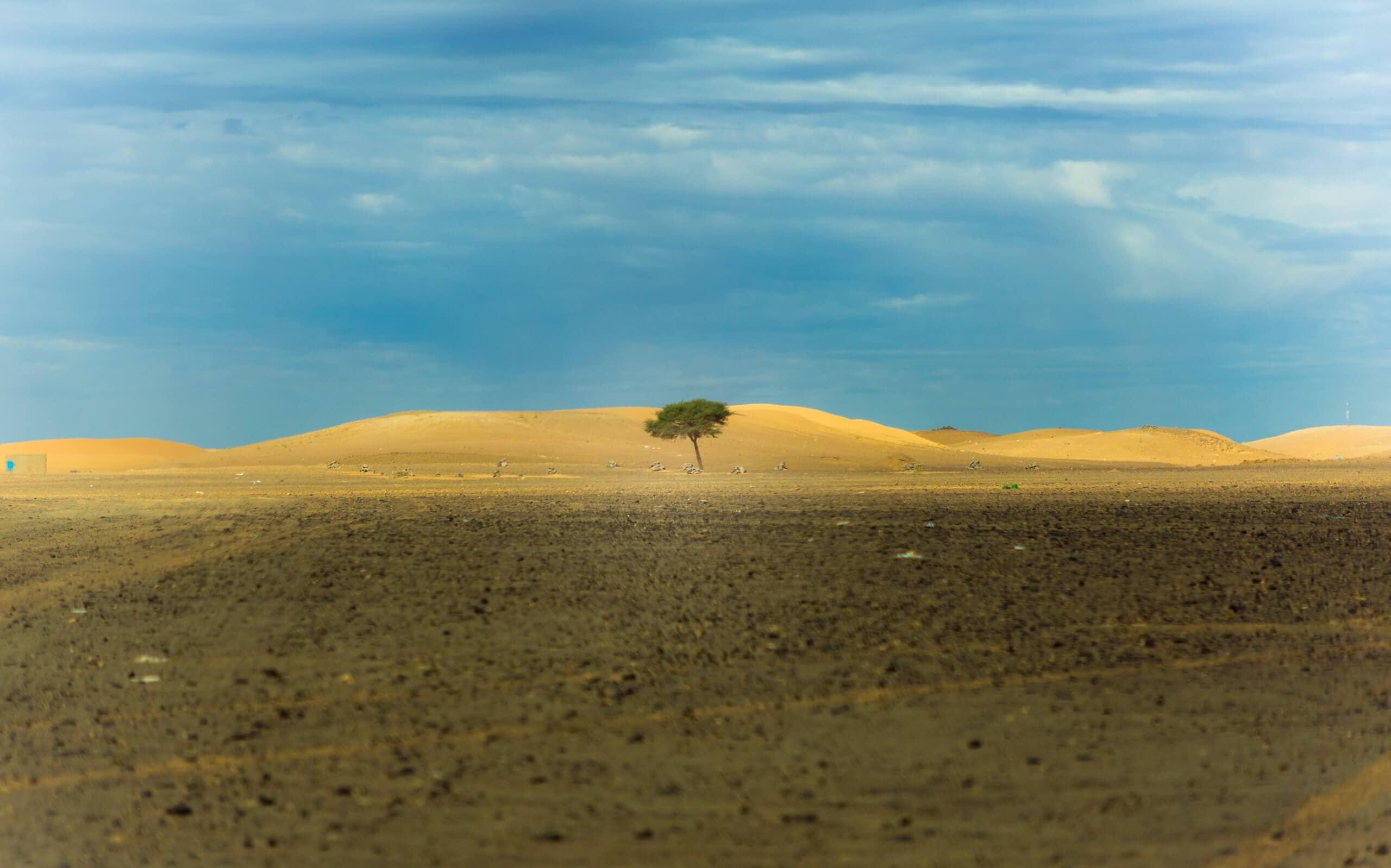 Barren skyline with one tree